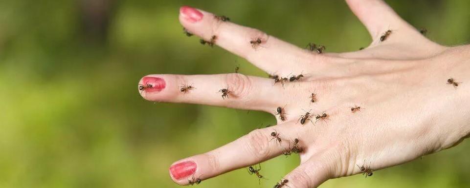 почему снятся муравьи